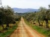 Pista entre olivares