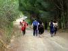 Continuación entre pinares hacia La Aliseda. Autor: Ricardo Benítez Lomas